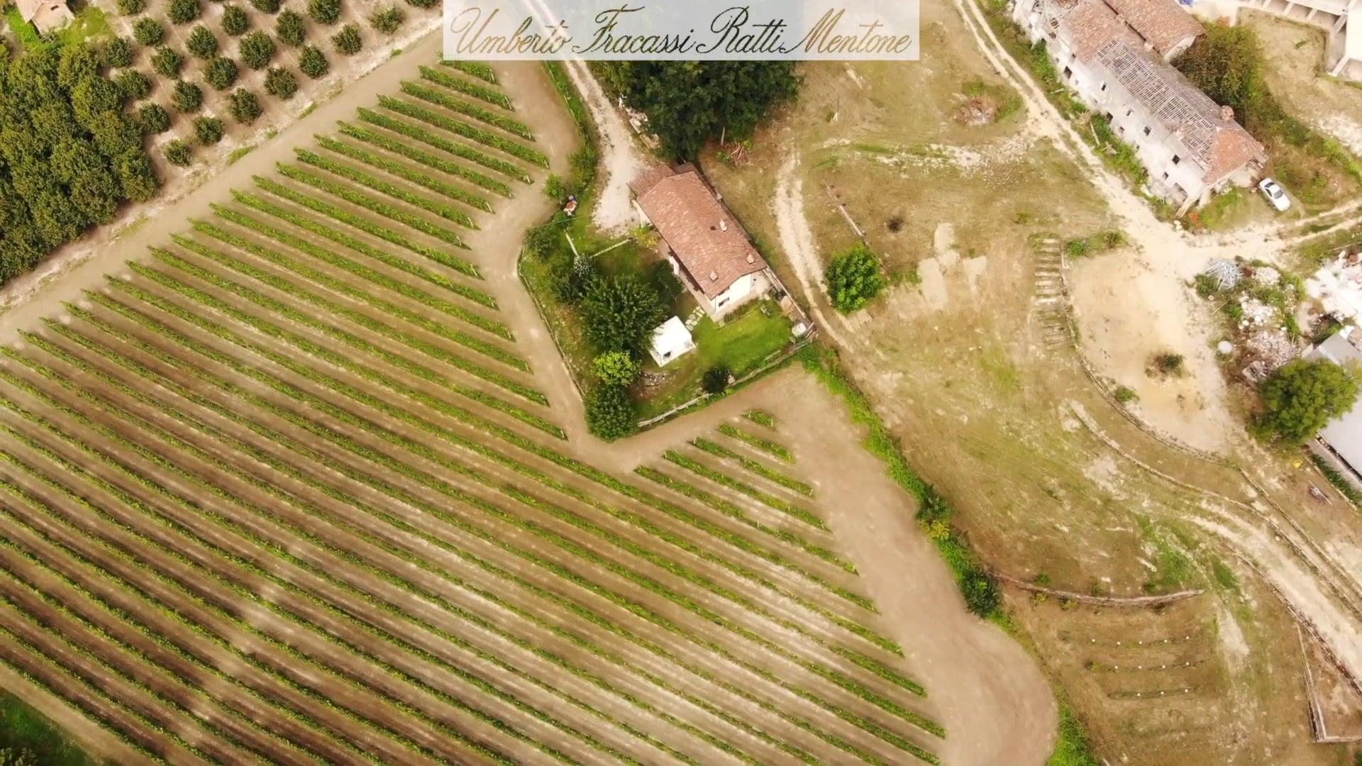 Umberto Fracassi | Il vigneto tra Cherasco e La Morra | The vineyard between Cherasco e La Morra