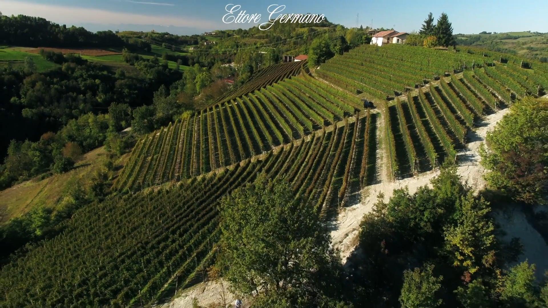 Ettore Germano | Il vigneto di Cigliè | The vineyard in Cigliè