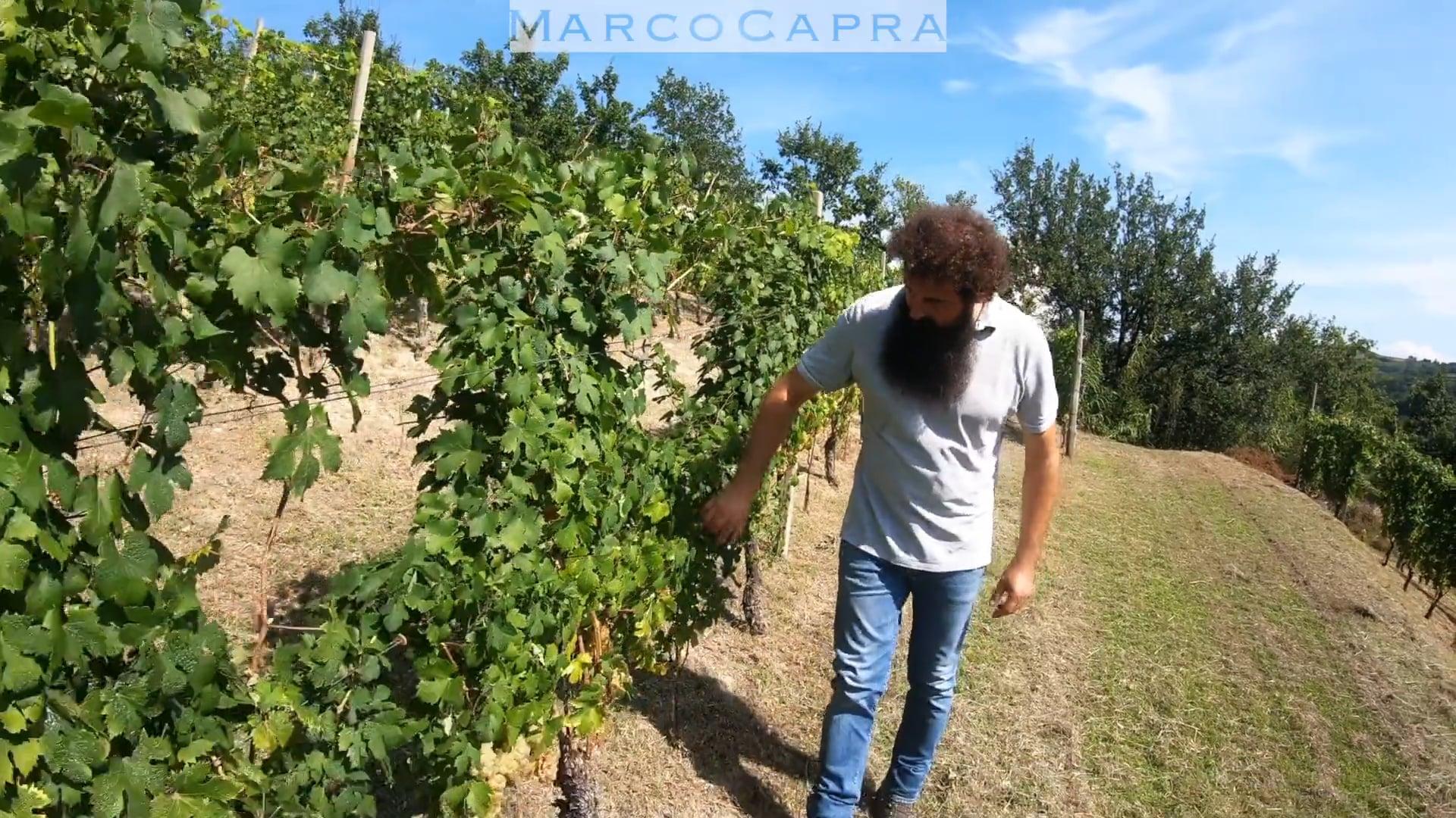 Marco Capra | Il vigneto di Santo Stefano Belbo | The vineyard in Santo Stefano Belbo