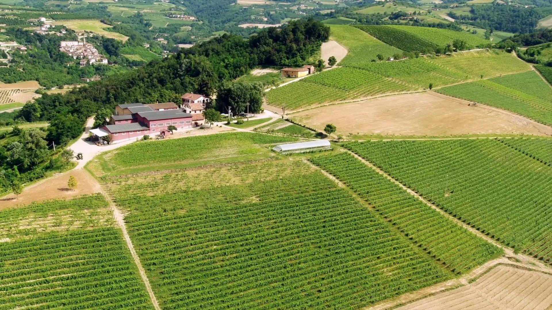 Rivetto | Il vigneto tra Sinio | The vineyard between Sinio