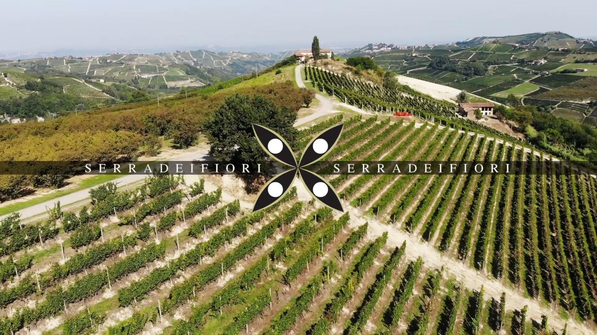 Serra dei Fiori | Il vigneto di Trezzo Tinella | The vineyard of Trezzo Tinella