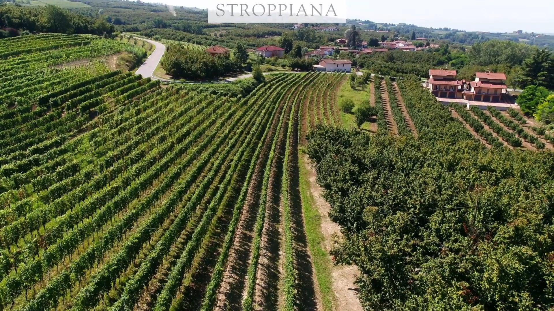 Stroppiana | Il vigneto in La Morra | The vineyard in La Morra