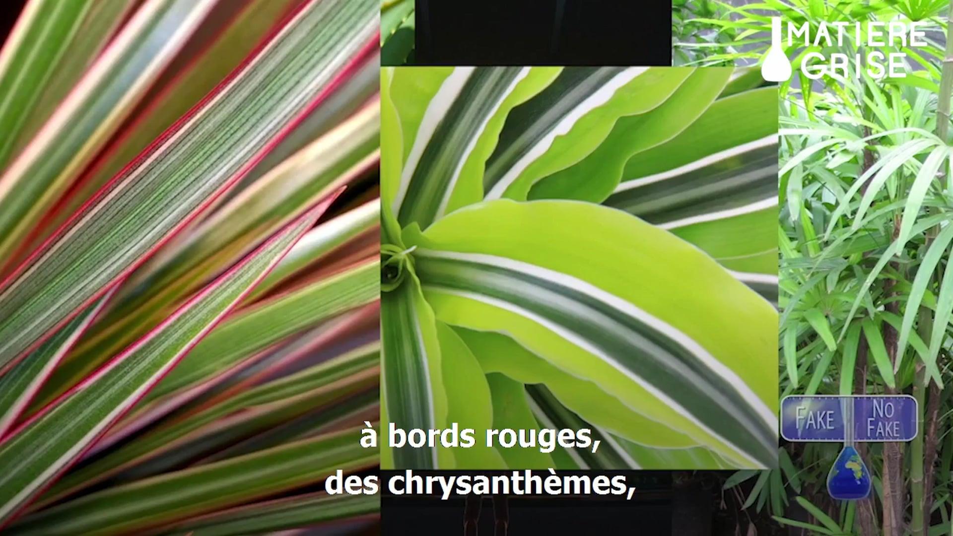 Matière Grise: Les plantes et l'oxygène