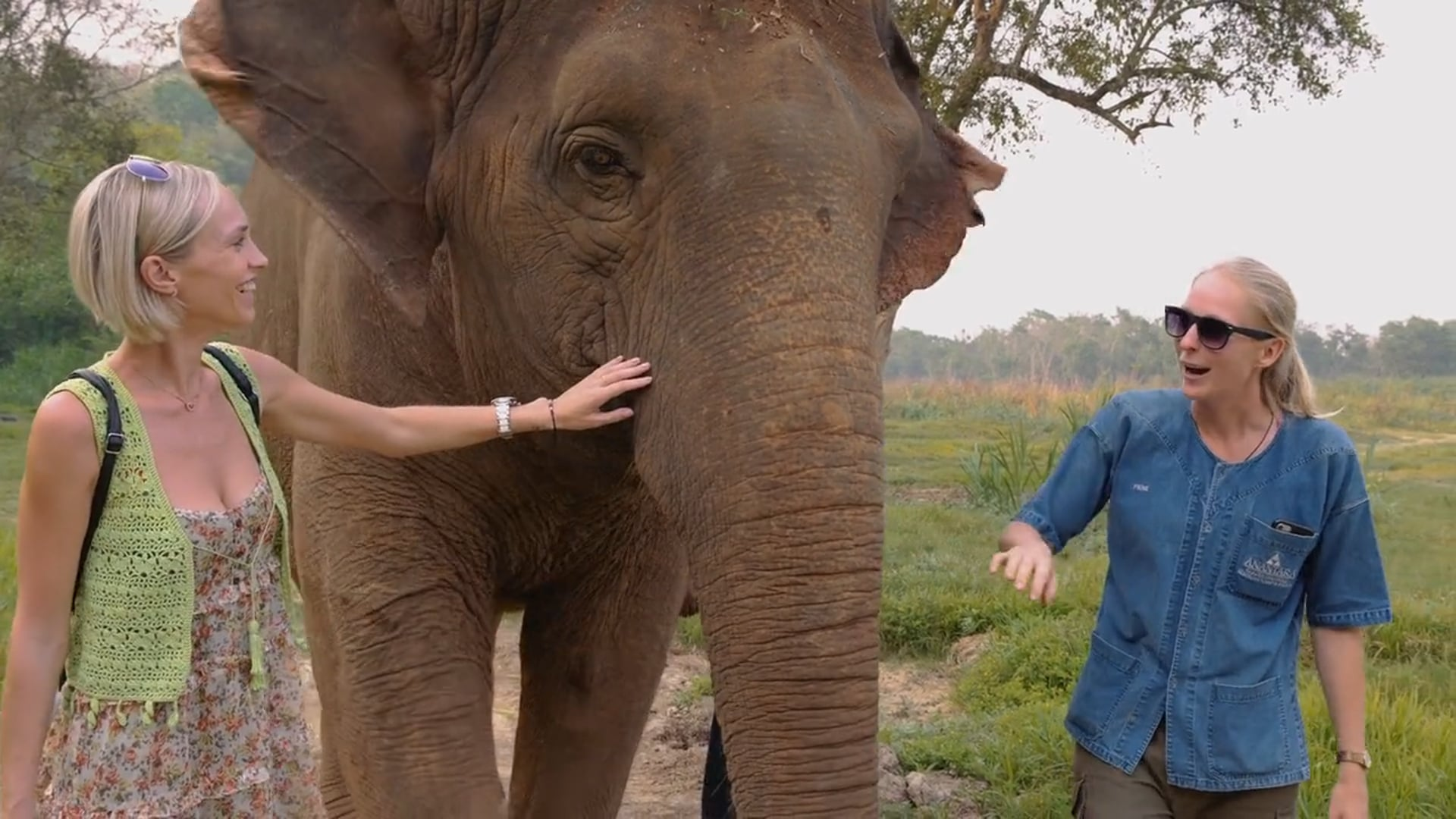BEYOND HORIZONS_ Elephant Welfare @ Golden Triangle Asian Elephant Foundation