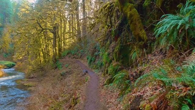 Oregon Waterfalls. Wintertime - Nature Walking Tour