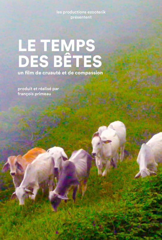 Photo d'un champ vert dans les montagnes, en angle donc, sur lequel broutent cinq moutons.